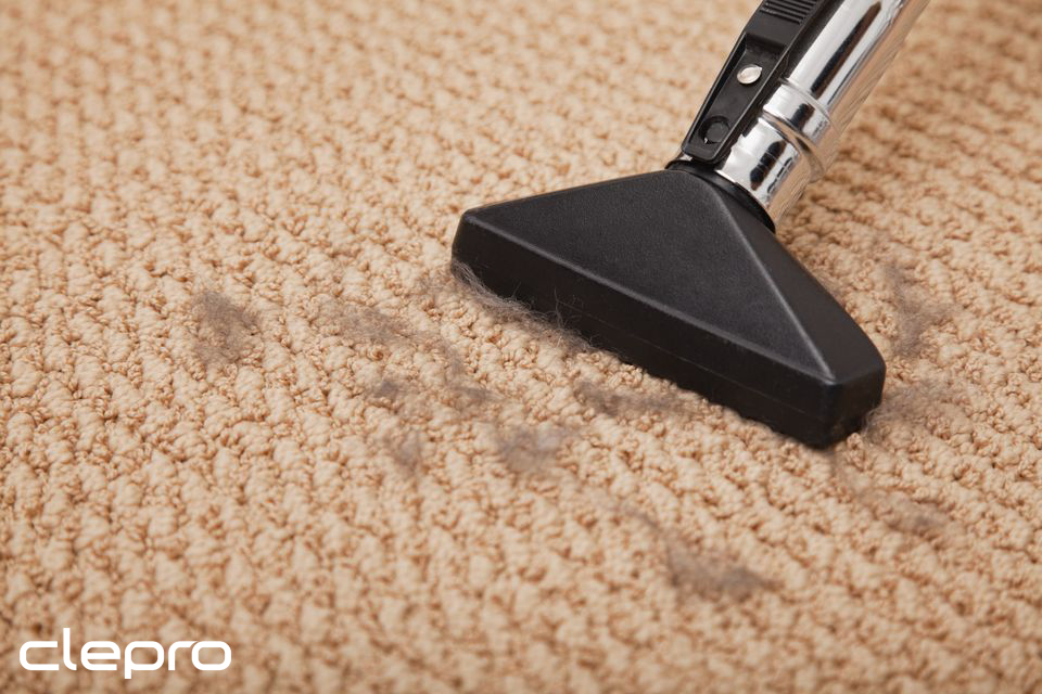 Can You Vacuum Every Day and Ruin Carpet?